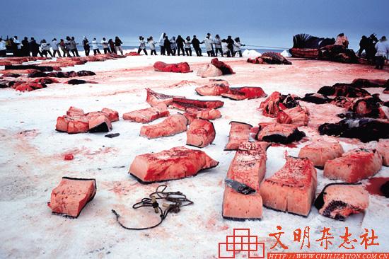 拯救地球上最大的动物:鲸