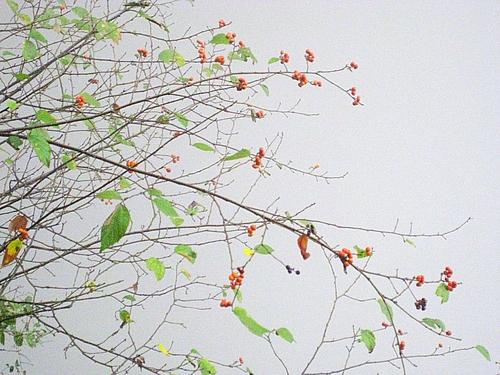 精神写不出,以草木写之.这样的翠色虽在秋日,也绽出了许多春意