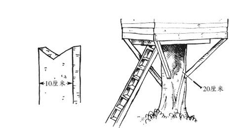 ——《寻找家园:18个奇思妙想的家》户外游戏; 木头房子结构图;